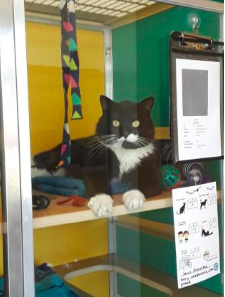 black and white cat sitting in shelter
