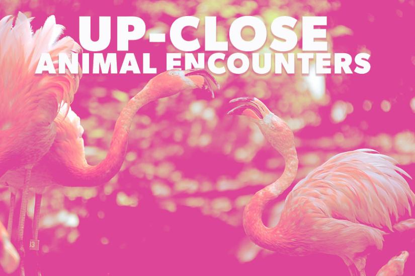 flamingle animal encounter