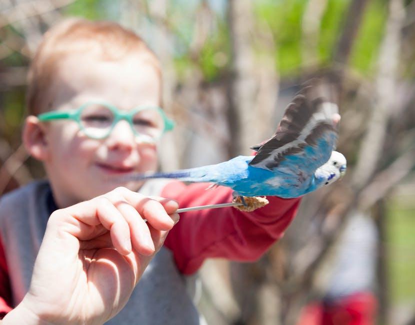 parakeet adventure aviary