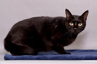 Troy, Cat