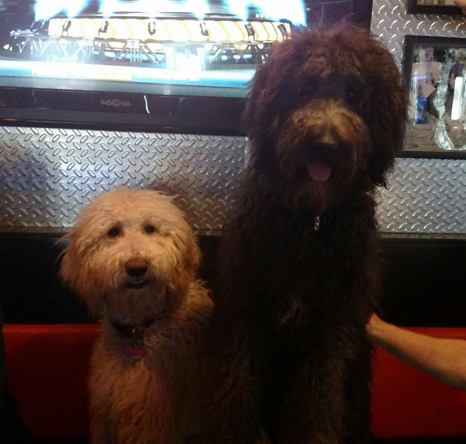 two dogs chillin in a bar