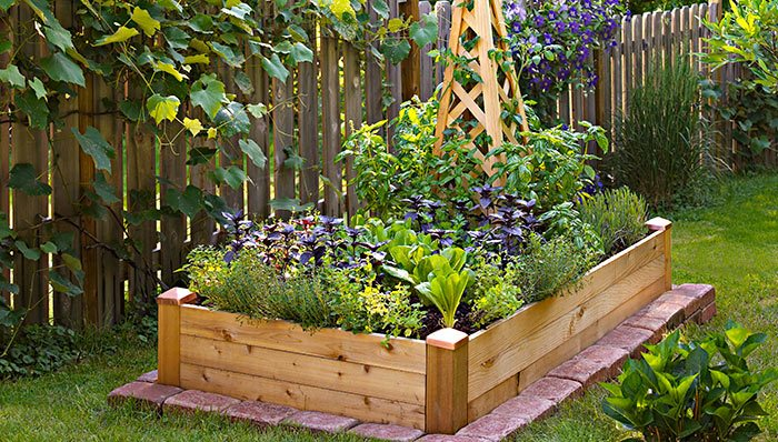 square foot garden, planter