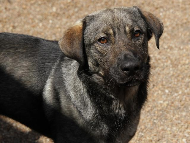Benny, Dog