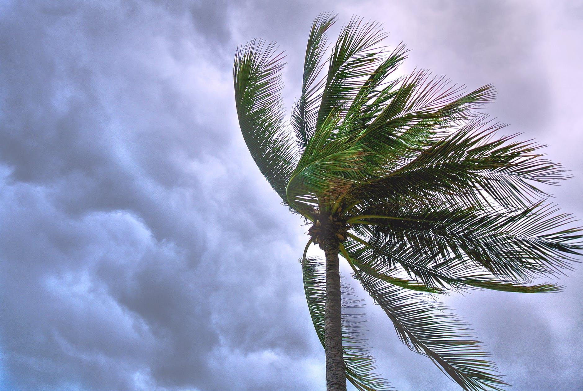hurricane, palm tree