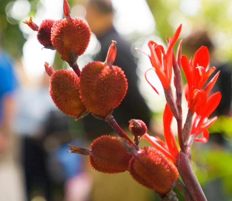 flowers at denver botanic gardens