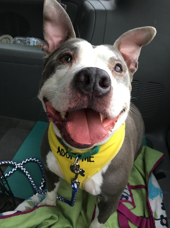 happy dog in back of car