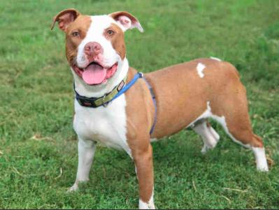 Ravi, Dog