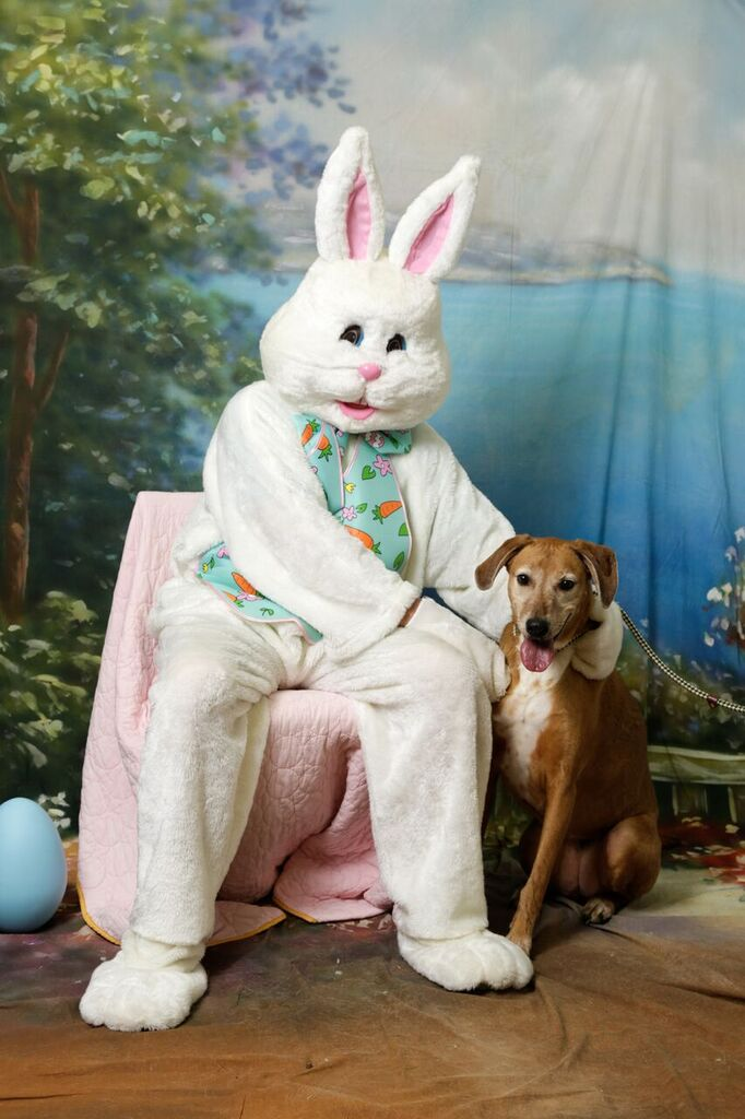 dog with easter bunny