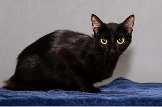 Baymax, Black Cat