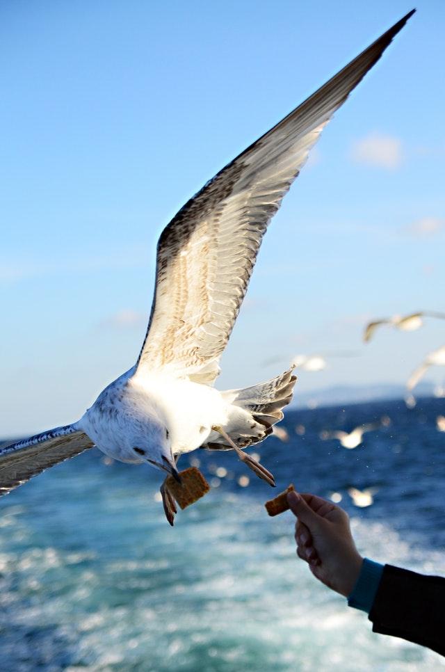 seagull grabbing a quick snack