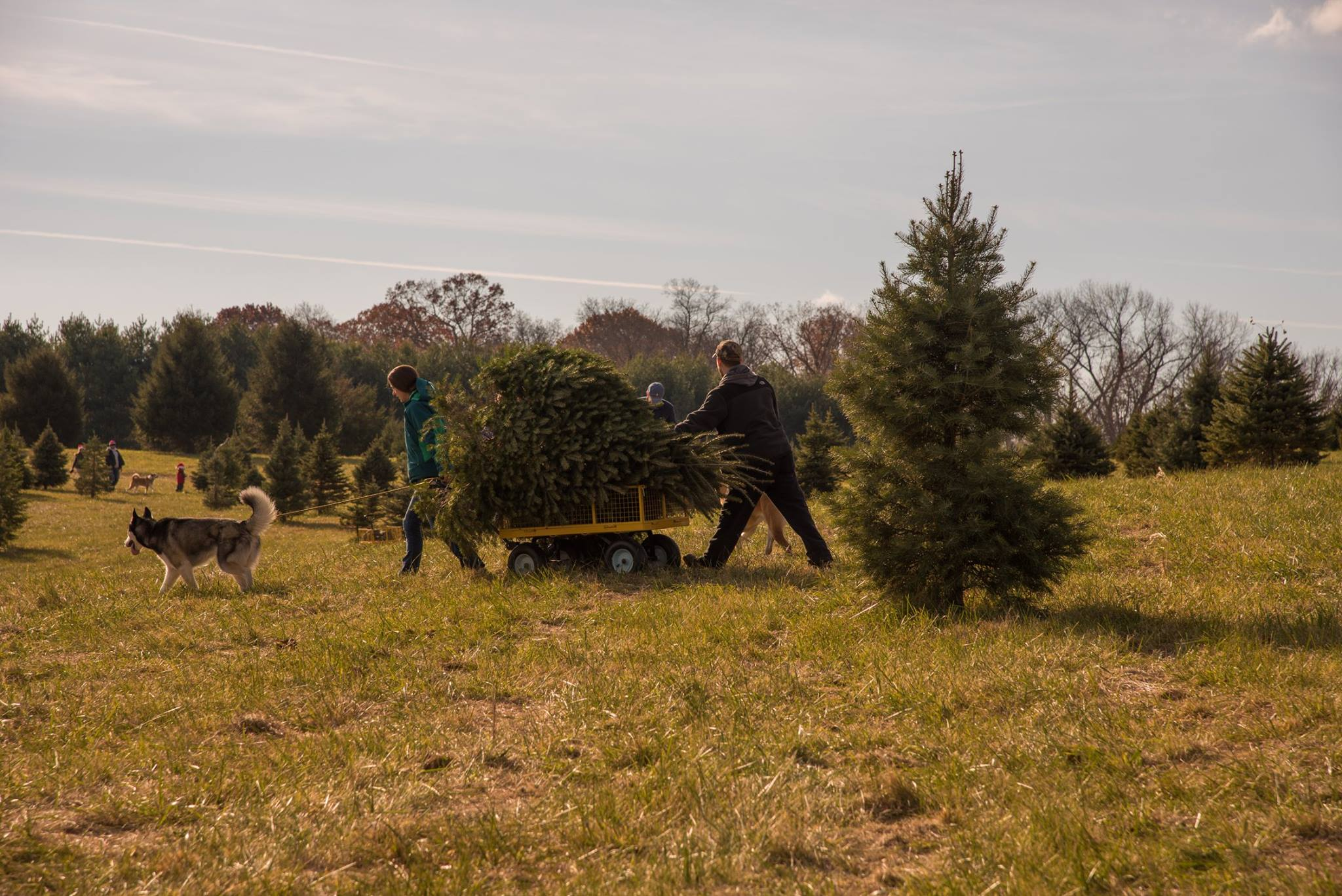 family cutting down christmas tree