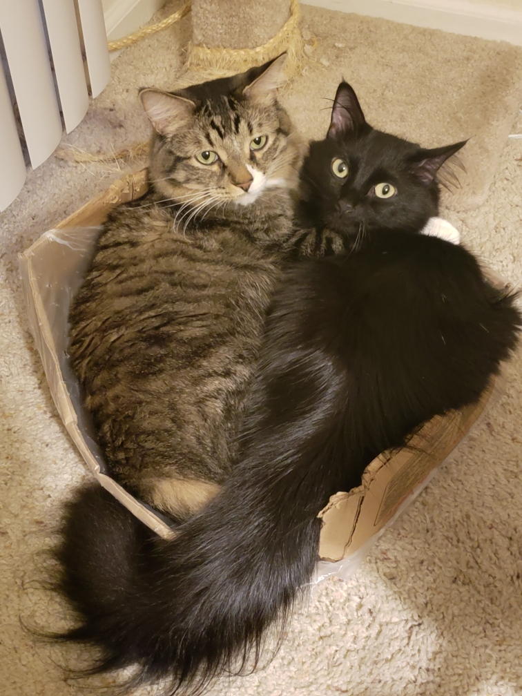 two cats in a box if i fits i sits