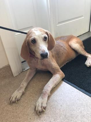 Karamel Kathy, Dog