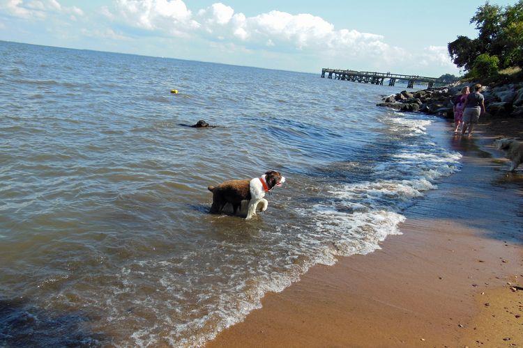 dog at downs memorial dog beach courtesy of bring fido