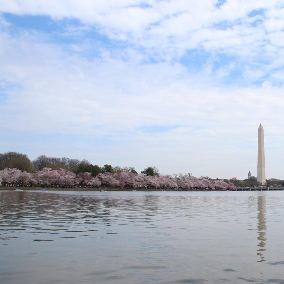 Tidal Basin, Washington Monument