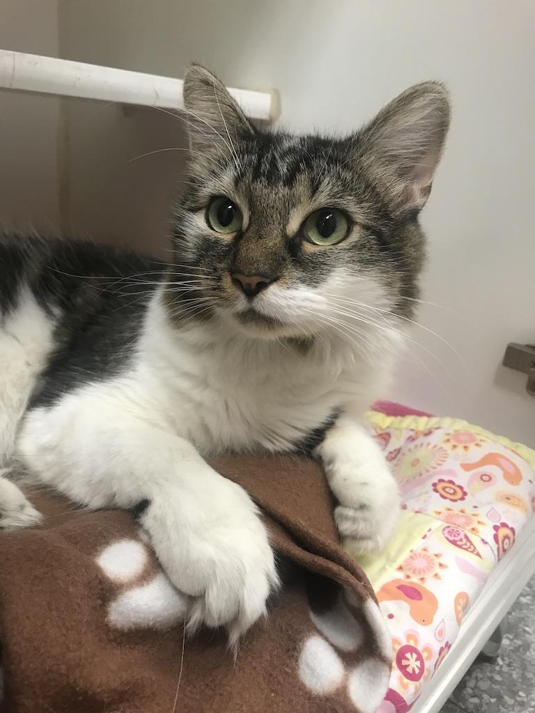 Joshua, Cat