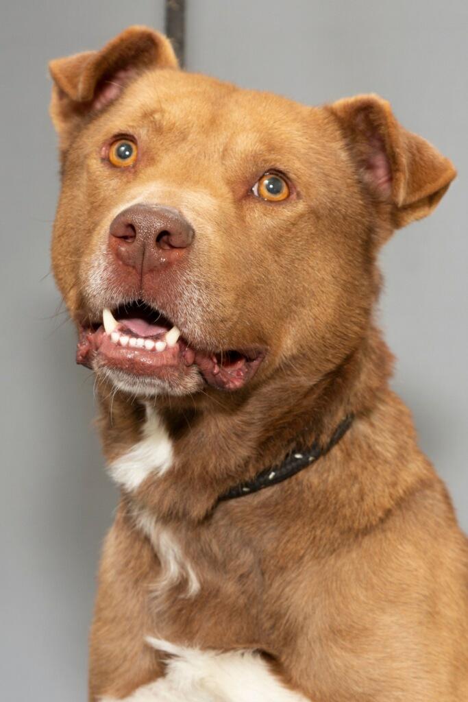 Simon, Dog
