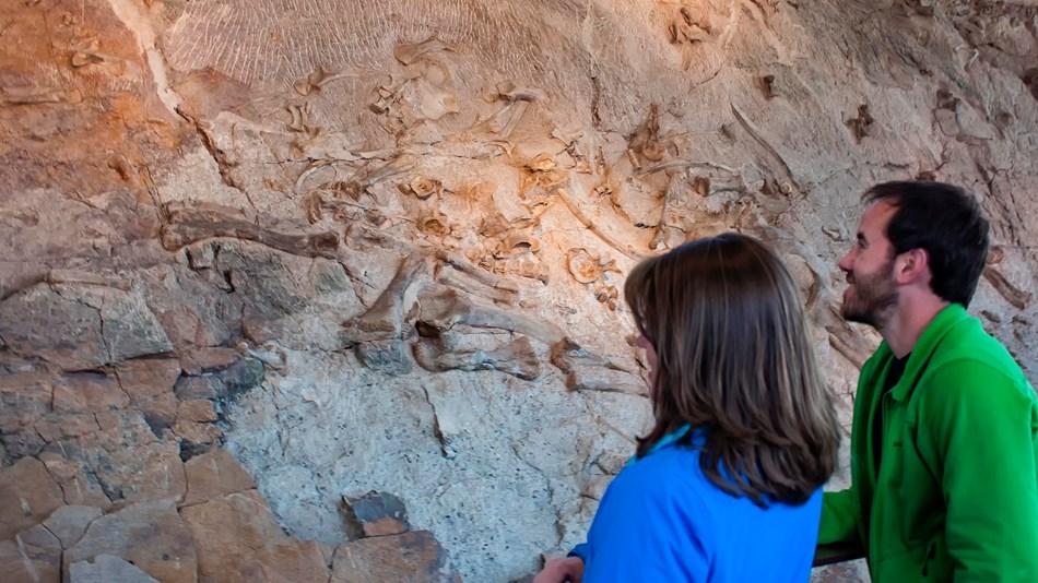 dinosaur fossils in colorado