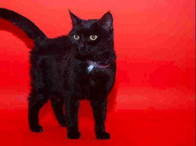 Clyde, Black Cat