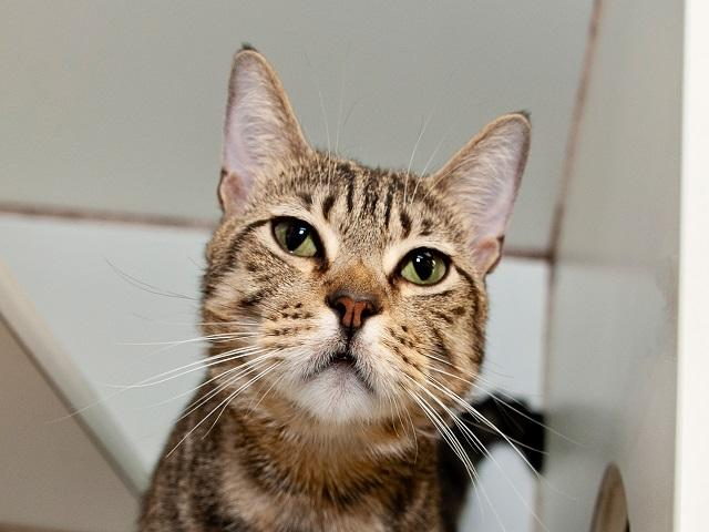 Benny, Cat
