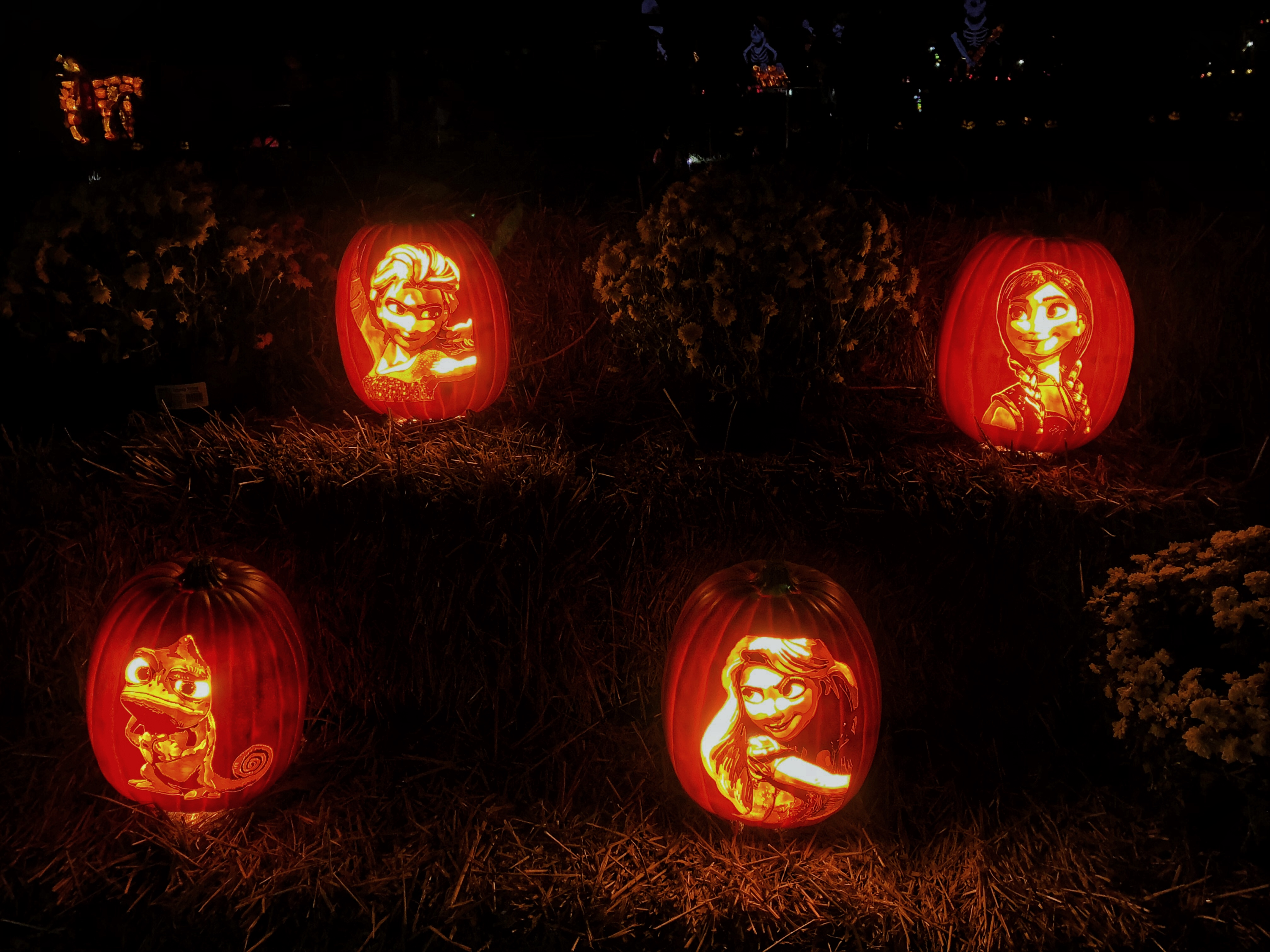 Frozen and Tangled Illuminated Pumpkins at The Glow