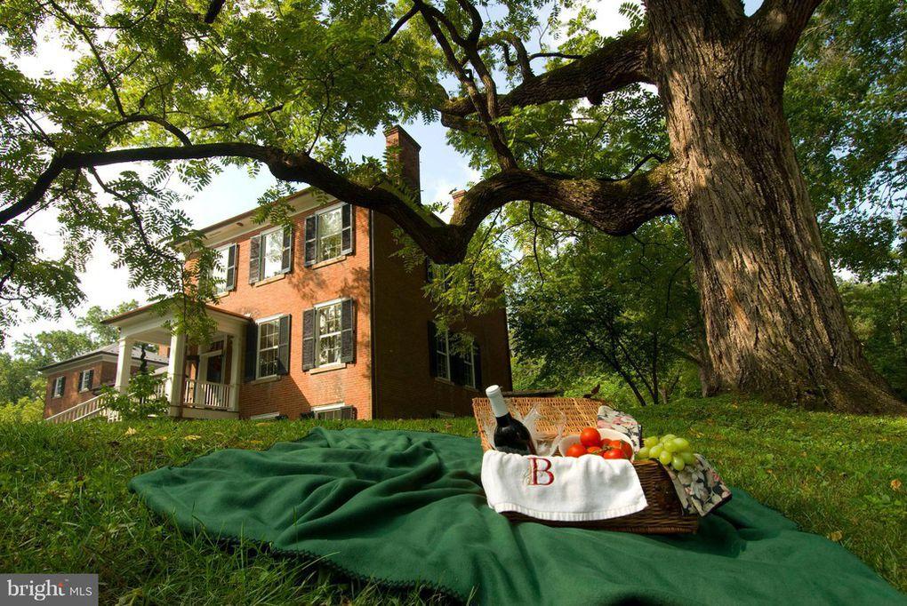 picnic, yard