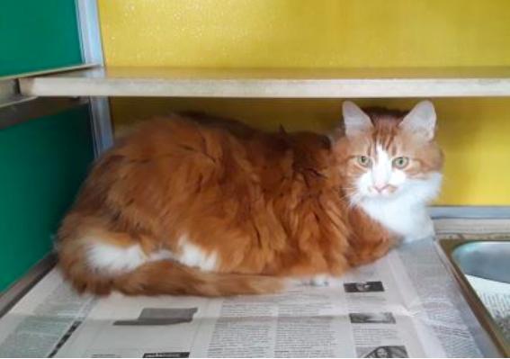 Jenkins Cat