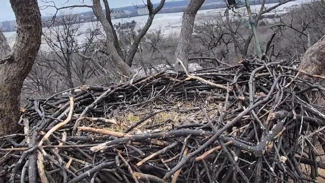 Earth Conservation Corps empty nest