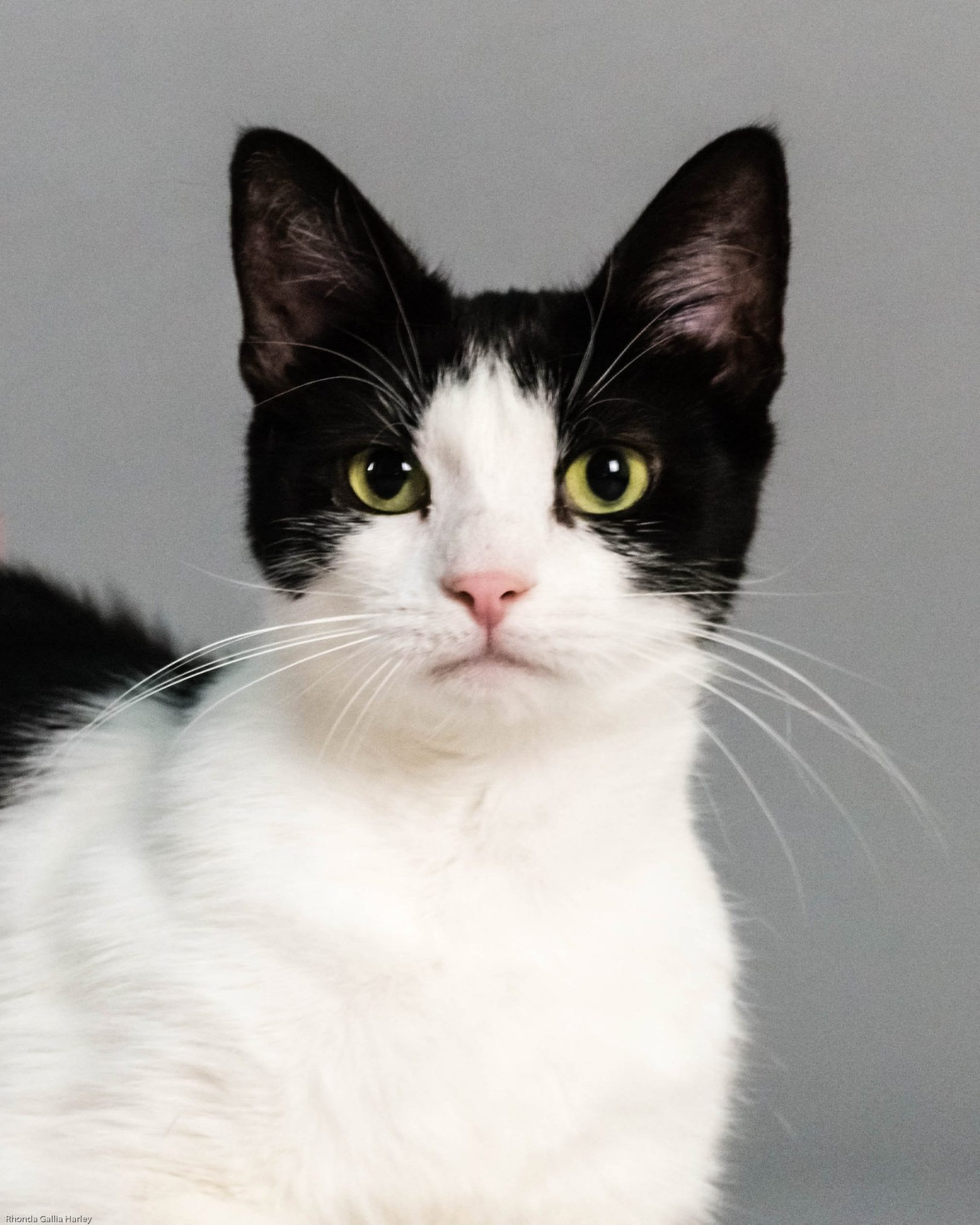 Bella, Cat