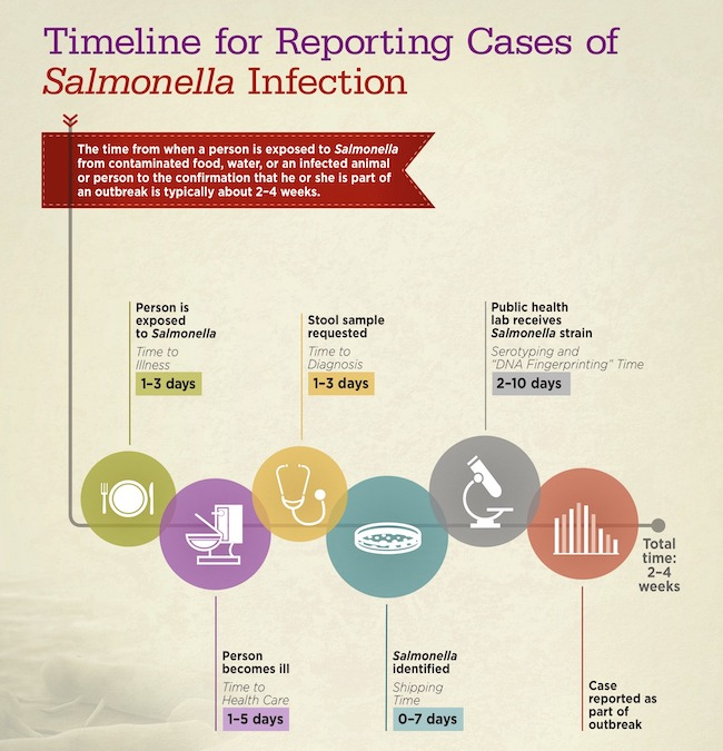 Salmonella infection timeline