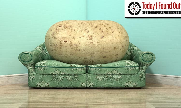 A couch potato