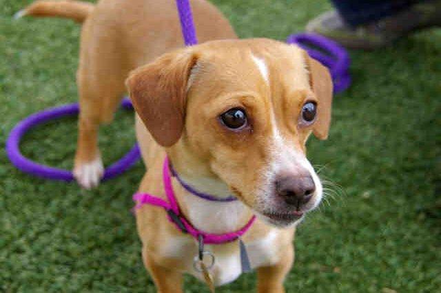 Daisy dog adoption