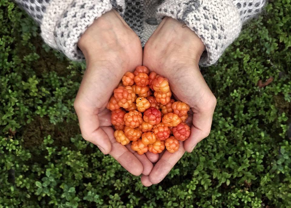 Finland, berries
