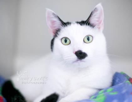 Glitter Cat