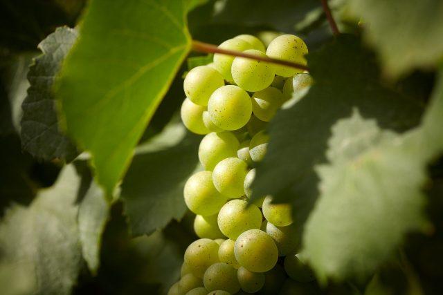 winery theft