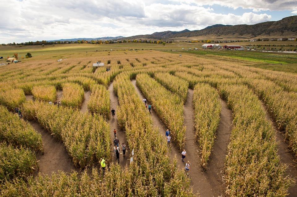 Corn Maze Denver Botanical Gardens