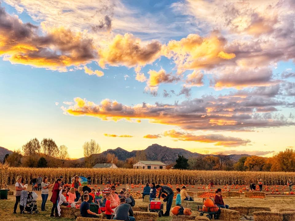 Diana's Pumpkin Corn Maze