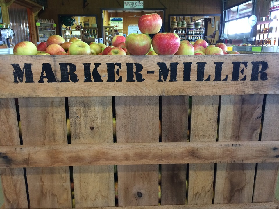 apples, Marker-Miller orchards