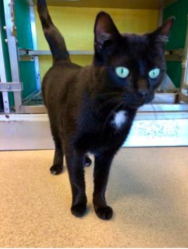 Marcus, Black Cat