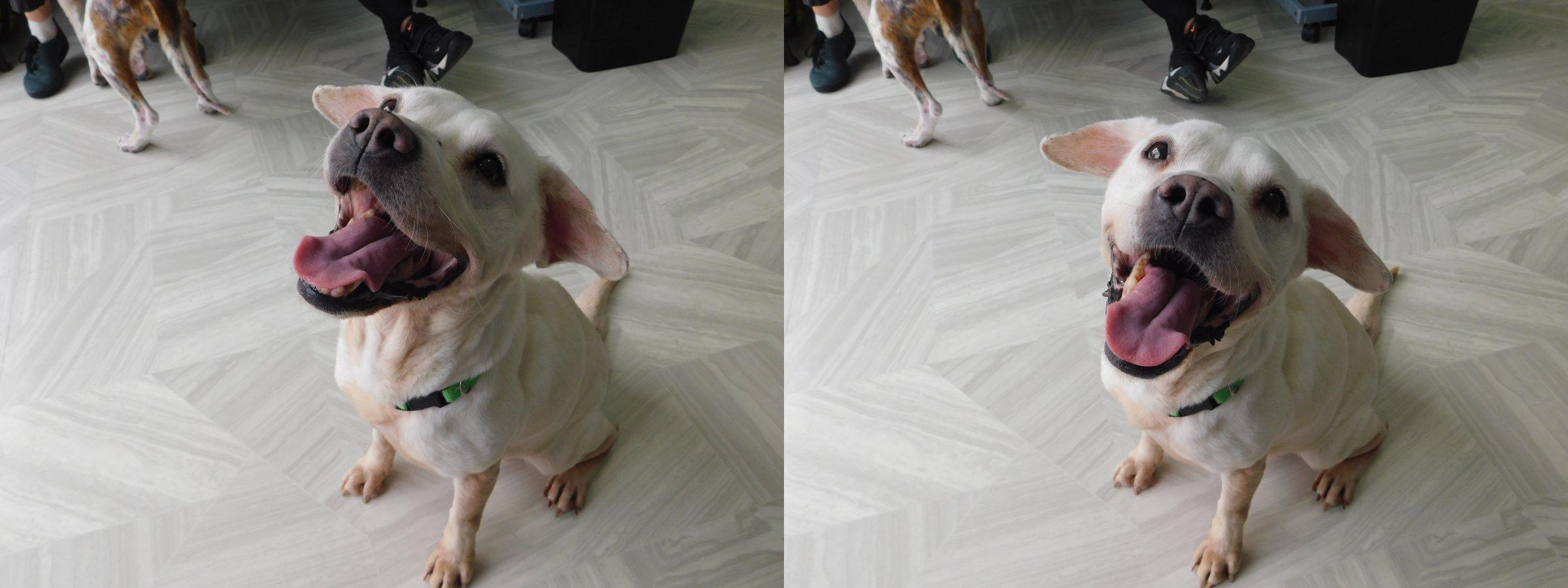 Mama Mia Dog