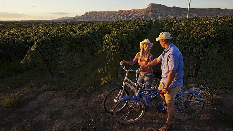 wine biking tour