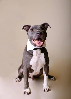 Bronco Dog