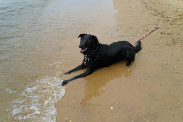dog at matapeake park dog beach, courtesy of bringfido