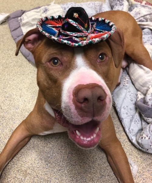dog with mini sombrero