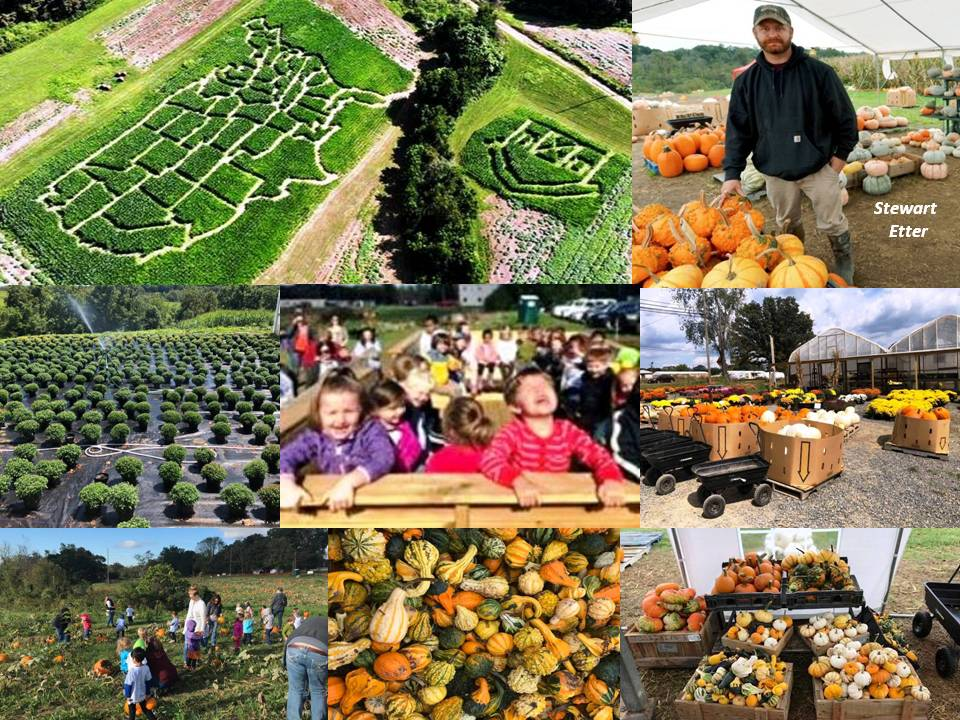 fall corn maze virginia lee highway farm pumpkins things to do in Virginia