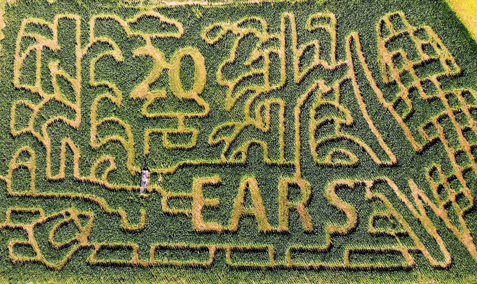 The Corn Maze in the Plains Virginia