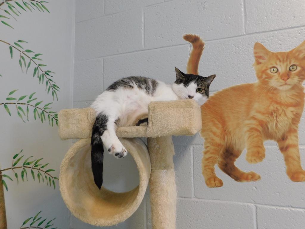 twilla, cat