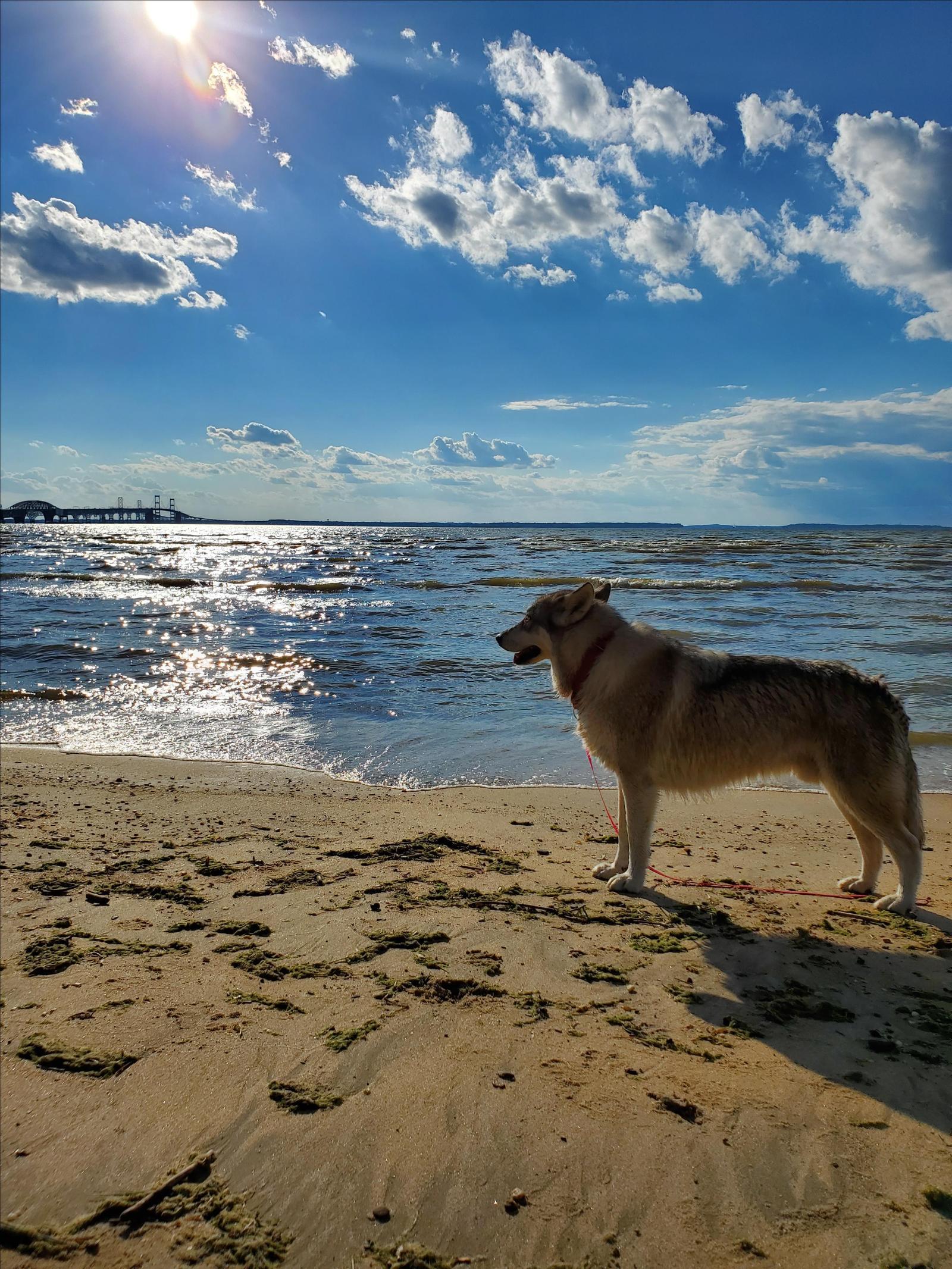 dog at terrapin dog beach