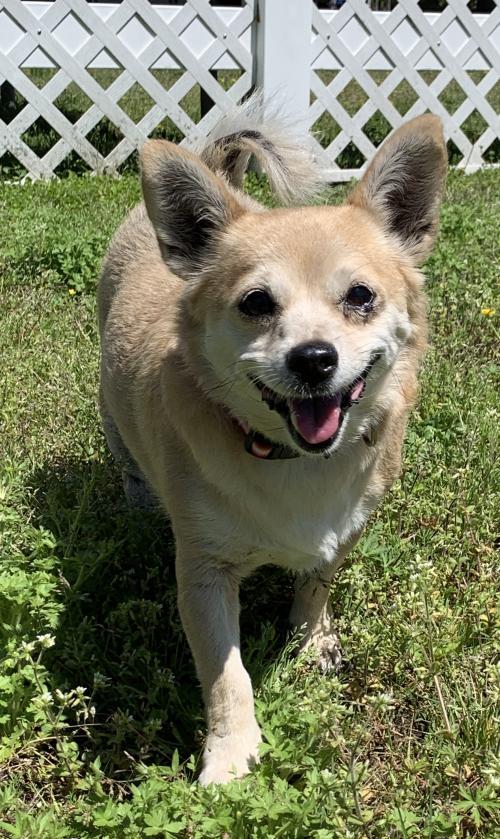 smiling dog in yard