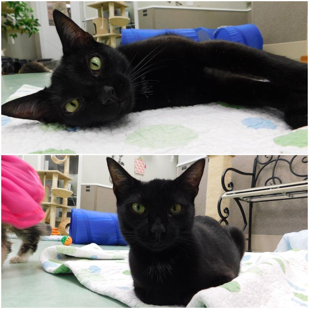 Pancake, Black Cat
